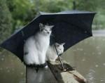 cat-in-the-rain-25