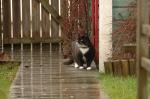 cat-in-the-rain-9