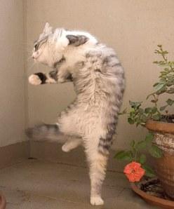 cat dancing3