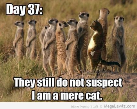 funny-mere-cat-picture1