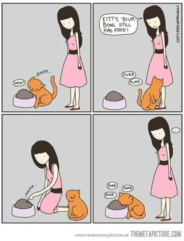 funny-cat-logic-food-girl