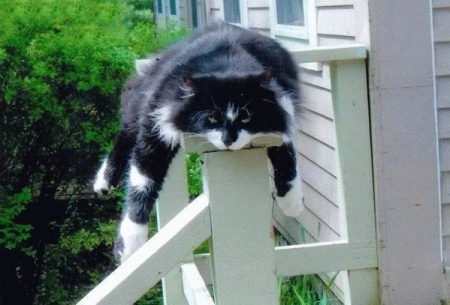 cat-on-post