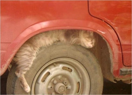 cat-on-tire