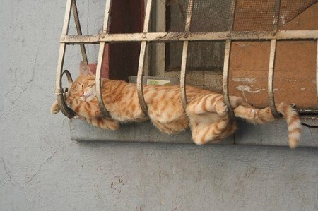 cat-sleeping1