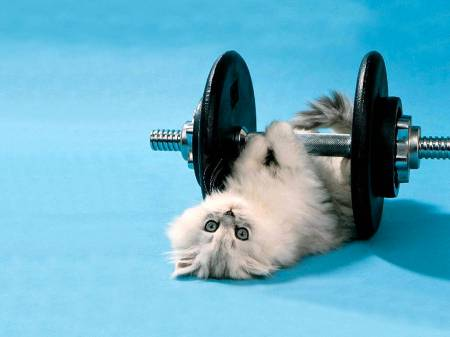 Funny_Kitten_Lifting_Weights3