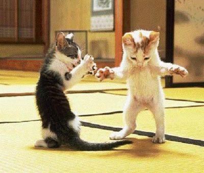 myspace-cats-images-0004